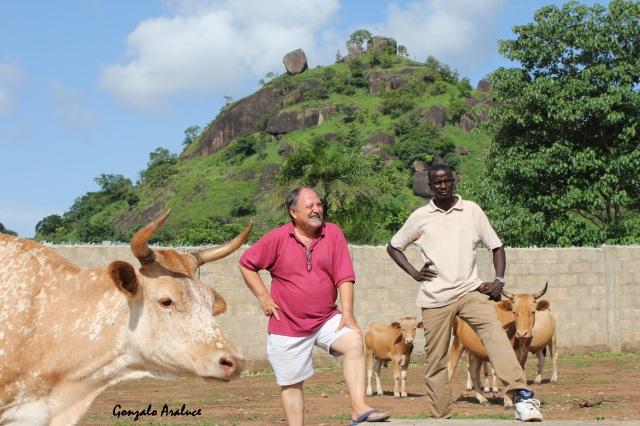 José Luis Garayoa en la misión de los Agustinos Recoletos en Kamabai, junto a su amigo Medo Mansaray. En primer plano, la vaca Iruña, regalo de un voluntario navarro. / Gonzalo Araluce.